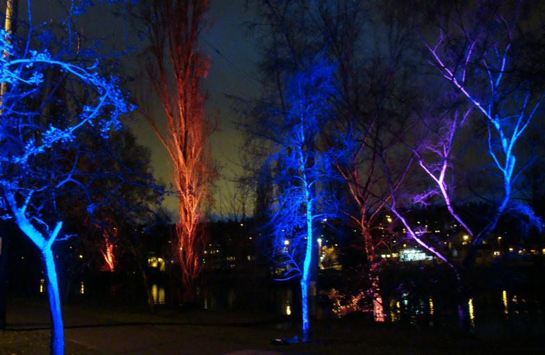 Chromatic Uplighting for the trees along Canal Street, Fremont neighborhood, Seattle 2009